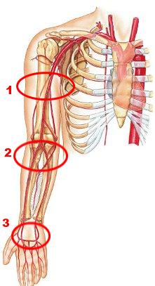 Arm-Arterien
